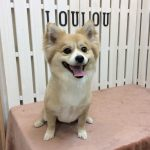 MIX犬 キキちゃん トリミング