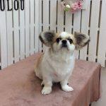 MIX犬 ポロちゃん シャンプー